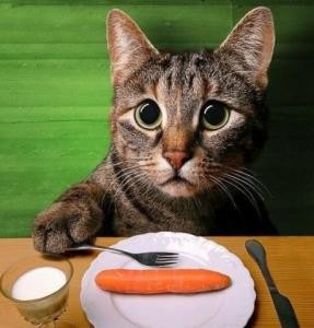 sad-cat-w-carrott